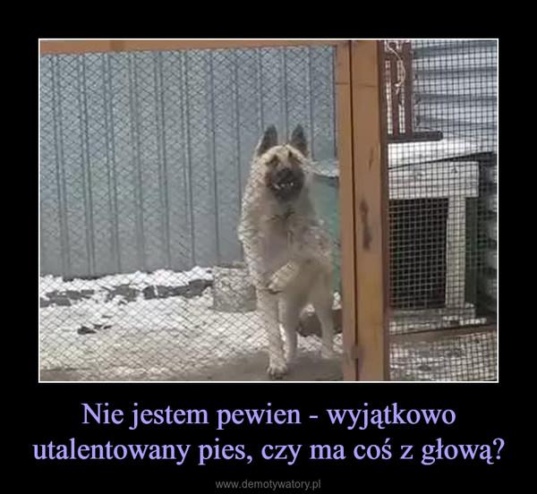 Nie jestem pewien - wyjątkowo utalentowany pies, czy ma coś z głową? –