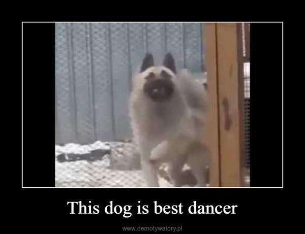This dog is best dancer –