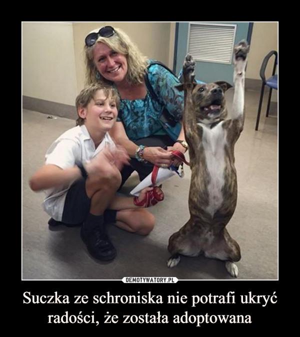 Suczka ze schroniska nie potrafi ukryć radości, że została adoptowana –