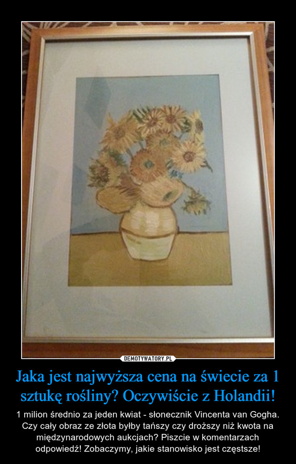 Jaka jest najwyższa cena na świecie za 1 sztukę rośliny? Oczywiście z Holandii! – 1 milion średnio za jeden kwiat - słonecznik Vincenta van Gogha. Czy cały obraz ze złota byłby tańszy czy droższy niż kwota na międzynarodowych aukcjach? Piszcie w komentarzach odpowiedź! Zobaczymy, jakie stanowisko jest częstsze!