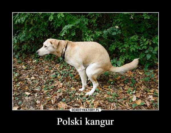Polski kangur –