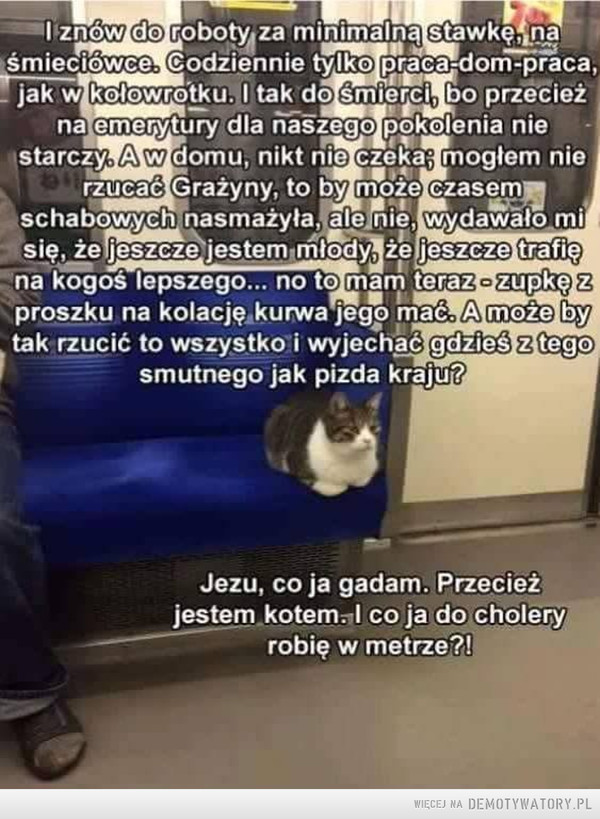 Kocie refleksje –