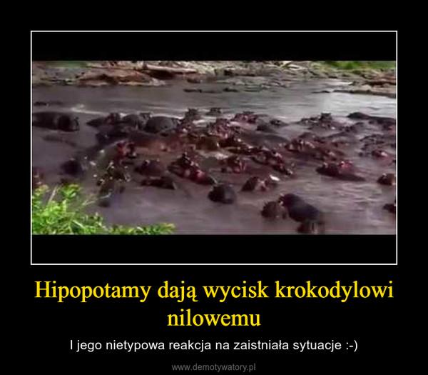 Hipopotamy dają wycisk krokodylowi nilowemu – I jego nietypowa reakcja na zaistniała sytuacje :-)