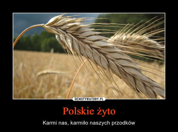 Polskie żyto – Karmi nas, karmiło naszych przodków