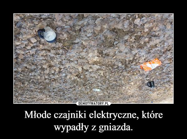 Młode czajniki elektryczne, które wypadły z gniazda. –