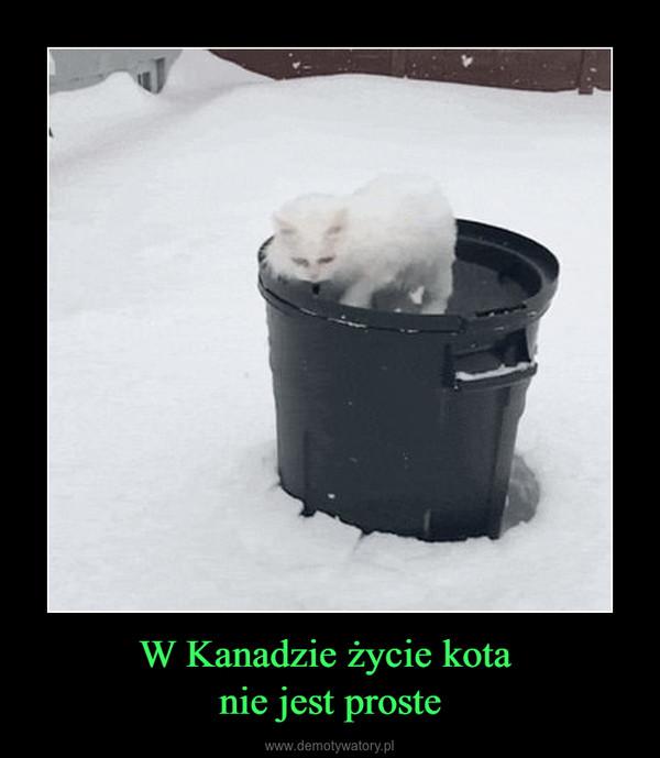 W Kanadzie życie kota nie jest proste –