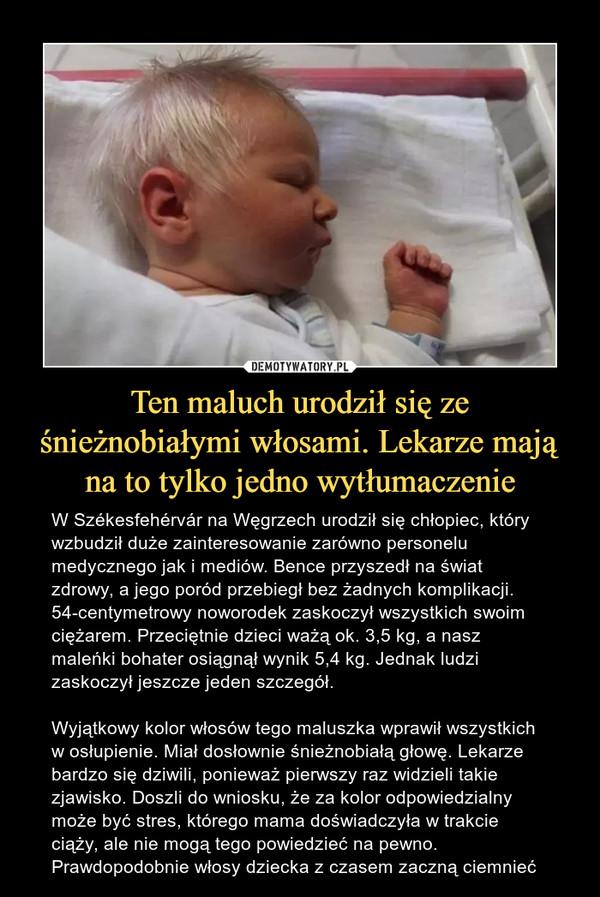 Ten maluch urodził się ze śnieżnobiałymi włosami. Lekarze mają na to tylko jedno wytłumaczenie – W Székesfehérvár na Węgrzech urodził się chłopiec, który wzbudził duże zainteresowanie zarówno personelu medycznego jak i mediów. Bence przyszedł na świat zdrowy, a jego poród przebiegł bez żadnych komplikacji. 54-centymetrowy noworodek zaskoczył wszystkich swoim ciężarem. Przeciętnie dzieci ważą ok. 3,5 kg, a nasz maleńki bohater osiągnął wynik 5,4 kg. Jednak ludzi zaskoczył jeszcze jeden szczegół.Wyjątkowy kolor włosów tego maluszka wprawił wszystkich w osłupienie. Miał dosłownie śnieżnobiałą głowę. Lekarze bardzo się dziwili, ponieważ pierwszy raz widzieli takie zjawisko. Doszli do wniosku, że za kolor odpowiedzialny może być stres, którego mama doświadczyła w trakcie ciąży, ale nie mogą tego powiedzieć na pewno. Prawdopodobnie włosy dziecka z czasem zaczną ciemnieć