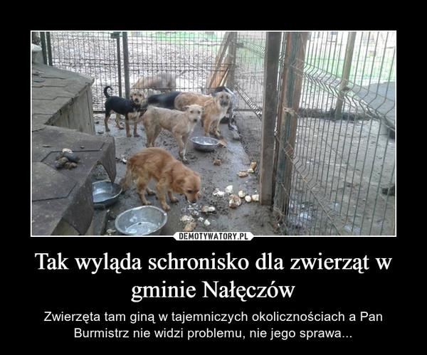 Tak wyląda schronisko dla zwierząt w gminie Nałęczów – Zwierzęta tam giną w tajemniczych okolicznościach a Pan Burmistrz nie widzi problemu, nie jego sprawa...