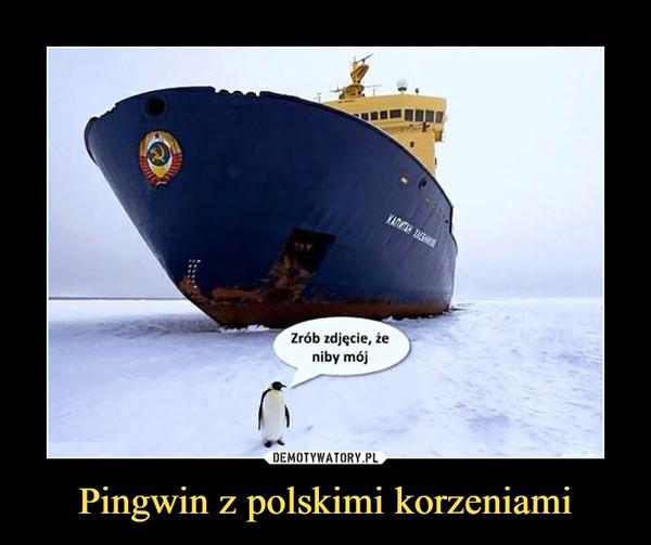 Pingwin z polskimi korzeniami –  Zrób zdjęcie, że niby mój