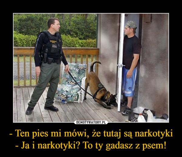 - Ten pies mi mówi, że tutaj są narkotyki- Ja i narkotyki? To ty gadasz z psem! –