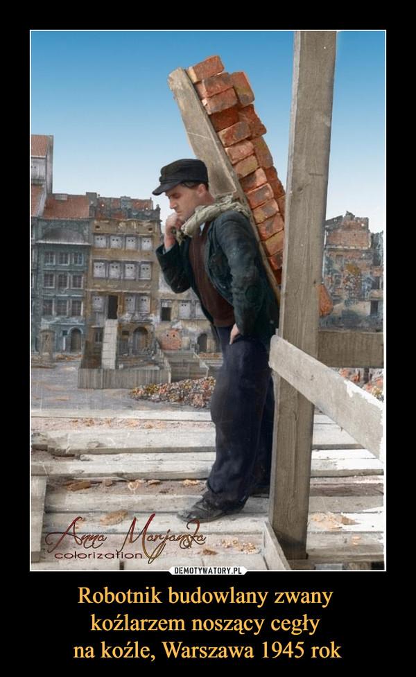 Robotnik budowlany zwany koźlarzem noszący cegły na koźle, Warszawa 1945 rok –