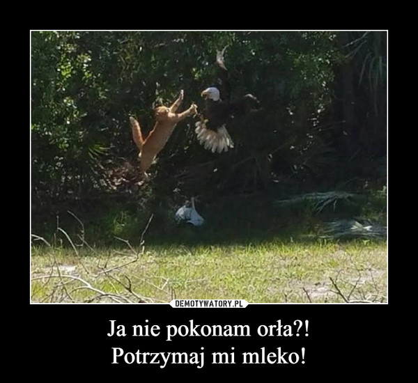 Ja nie pokonam orła?!Potrzymaj mi mleko! –