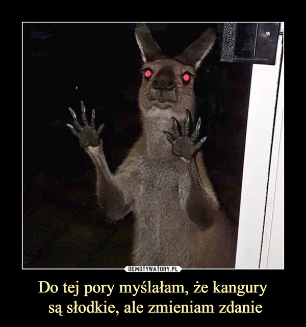 Do tej pory myślałam, że kangury są słodkie, ale zmieniam zdanie –