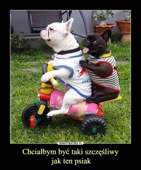 Chciałbym być taki szczęśliwy jak ten psiak –