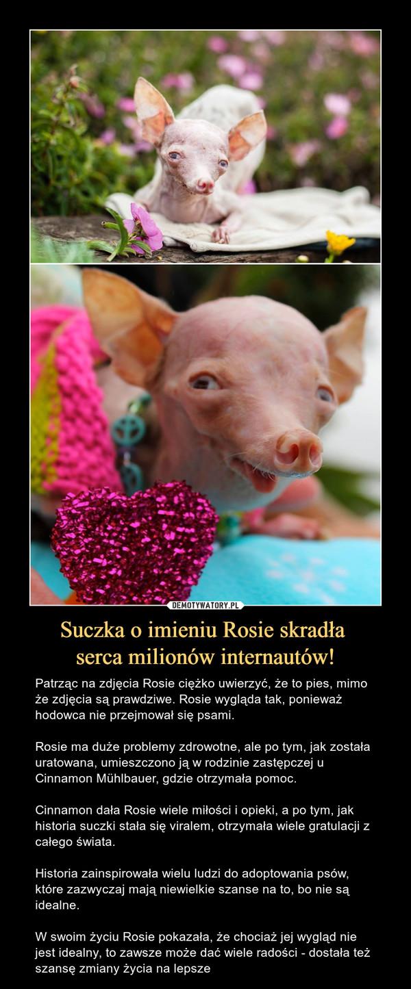 Suczka o imieniu Rosie skradła serca milionów internautów! – Patrząc na zdjęcia Rosie ciężko uwierzyć, że to pies, mimo że zdjęcia są prawdziwe. Rosie wygląda tak, ponieważ hodowca nie przejmował się psami.Rosie ma duże problemy zdrowotne, ale po tym, jak została uratowana, umieszczono ją w rodzinie zastępczej u Cinnamon Mühlbauer, gdzie otrzymała pomoc.Cinnamon dała Rosie wiele miłości i opieki, a po tym, jak historia suczki stała się viralem, otrzymała wiele gratulacji z całego świata.Historia zainspirowała wielu ludzi do adoptowania psów, które zazwyczaj mają niewielkie szanse na to, bo nie są idealne.W swoim życiu Rosie pokazała, że chociaż jej wygląd nie jest idealny, to zawsze może dać wiele radości - dostała też szansę zmiany życia na lepsze