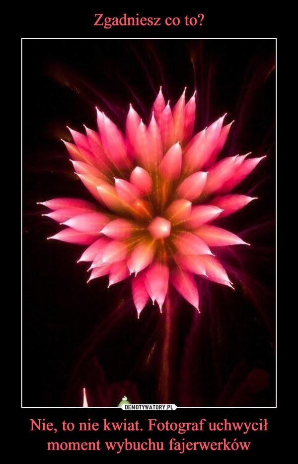 Nie, to nie kwiat. Fotograf uchwycił moment wybuchu fajerwerków –