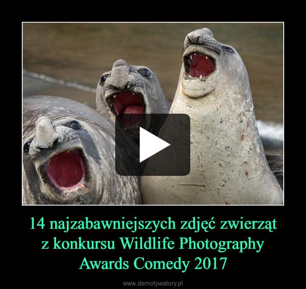 14 najzabawniejszych zdjęć zwierzątz konkursu Wildlife PhotographyAwards Comedy 2017 –