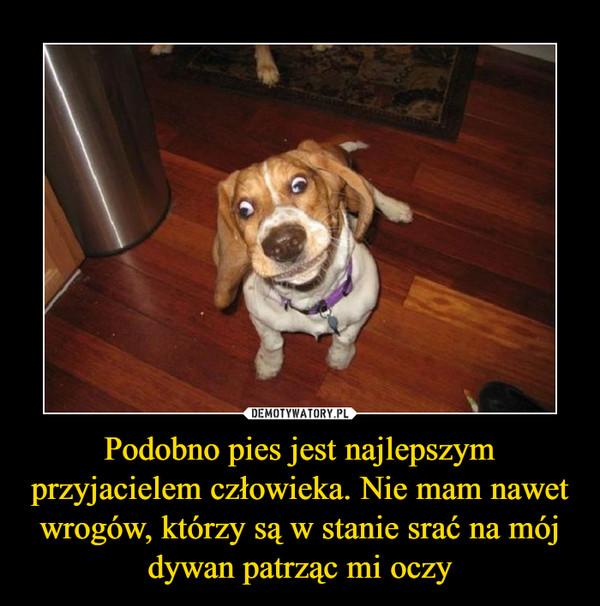 Podobno pies jest najlepszym przyjacielem człowieka. Nie mam nawet wrogów, którzy są w stanie srać na mój dywan patrząc mi oczy –
