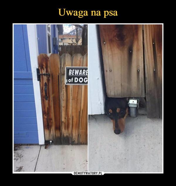 –  beware of dog