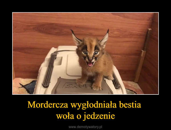Mordercza wygłodniała bestia woła o jedzenie –