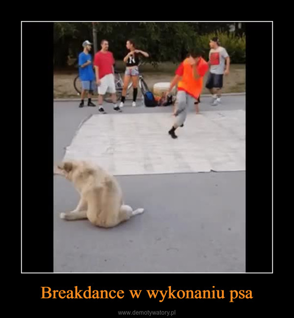 Breakdance w wykonaniu psa –