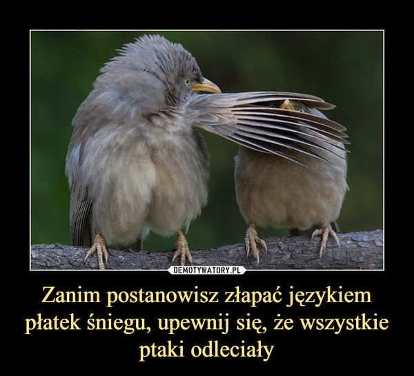 Zanim postanowisz złapać językiem płatek śniegu, upewnij się, że wszystkie ptaki odleciały –