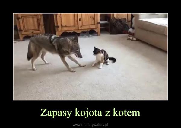 Zapasy kojota z kotem –