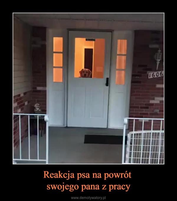 Reakcja psa na powrót swojego pana z pracy –