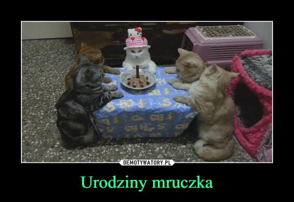 Urodziny mruczka –
