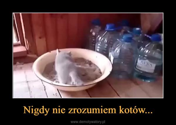 Nigdy nie zrozumiem kotów... –