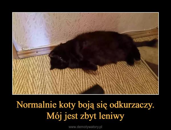 Normalnie koty boją się odkurzaczy. Mój jest zbyt leniwy –