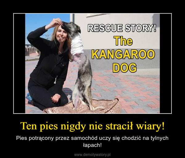Ten pies nigdy nie stracił wiary! – Pies potrącony przez samochód uczy się chodzić na tylnych łapach!
