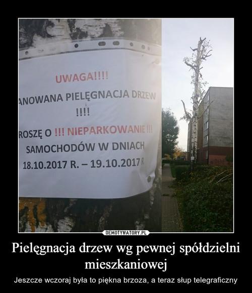 Pielęgnacja drzew wg pewnej spółdzielni mieszkaniowej
