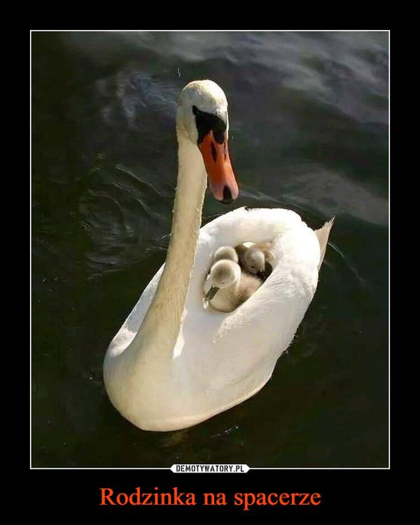 Rodzinka na spacerze –