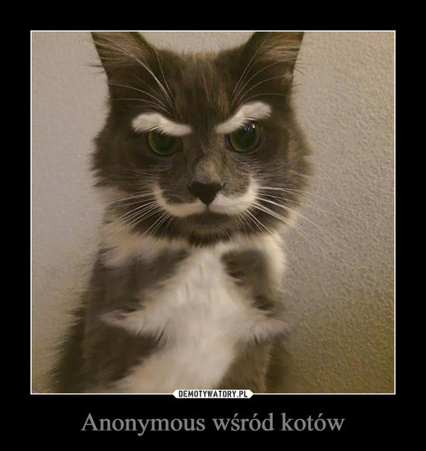 Anonymous wśród kotów –
