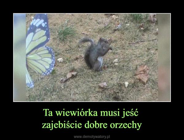 Ta wiewiórka musi jeść zajebiście dobre orzechy –