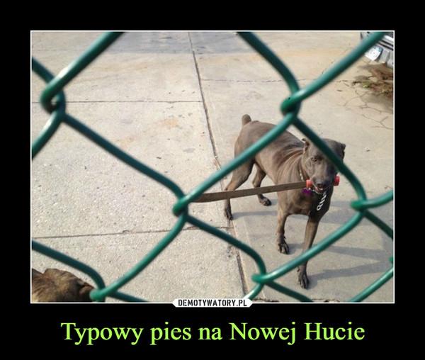 Typowy pies na Nowej Hucie –