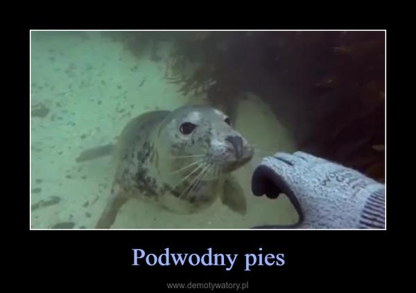 Podwodny pies –