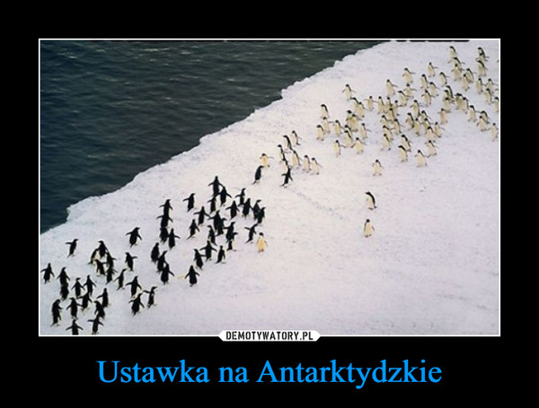 Ustawka na Antarktydzkie –