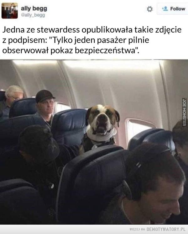 """Dobry piesek –  ally begg Jedna ze stewardess opublikowała takie zdjęcie z podpisem: """"Tylko jeden pasażer pilnie obserwował pokaz bezpieczeństwa""""."""