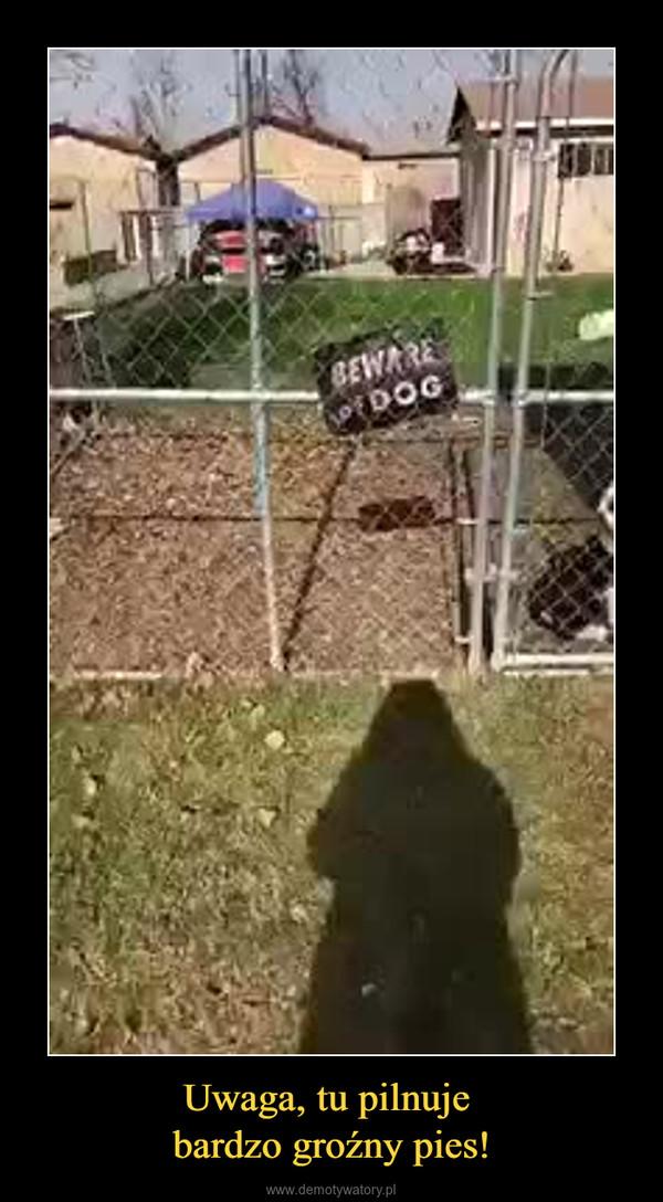 Uwaga, tu pilnuje bardzo groźny pies! –