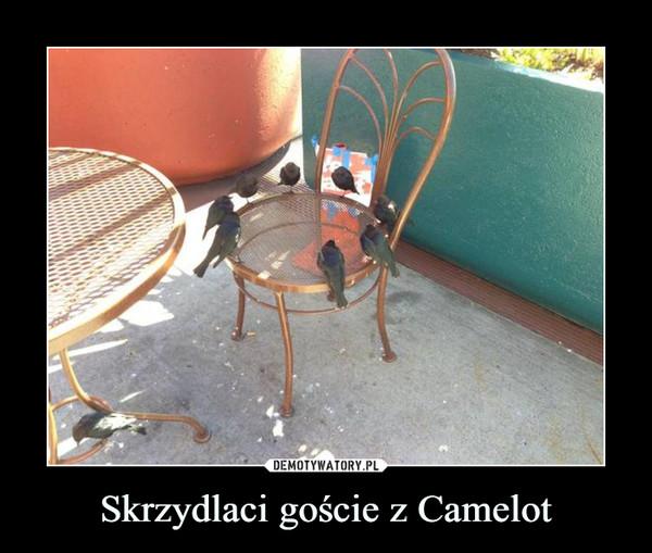 Skrzydlaci goście z Camelot –