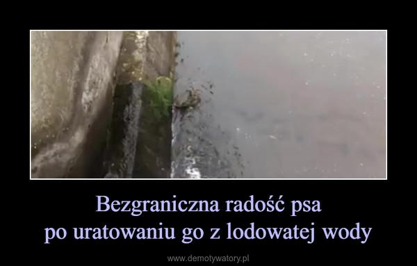 Bezgraniczna radość psapo uratowaniu go z lodowatej wody –