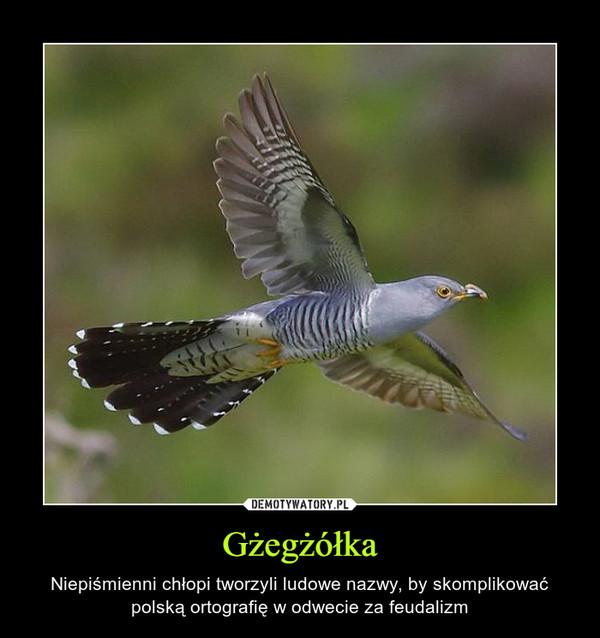 Gżegżółka – Niepiśmienni chłopi tworzyli ludowe nazwy, by skomplikować polską ortografię w odwecie za feudalizm