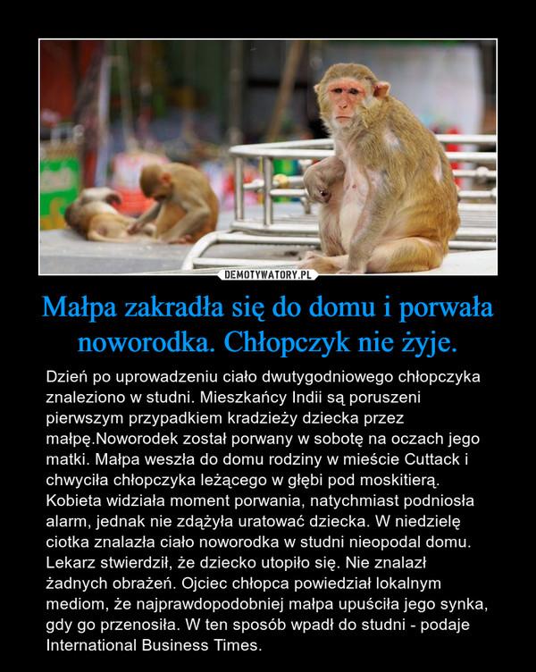 Małpa zakradła się do domu i porwała noworodka. Chłopczyk nie żyje. – Dzień po uprowadzeniu ciało dwutygodniowego chłopczyka znaleziono w studni. Mieszkańcy Indii są poruszeni pierwszym przypadkiem kradzieży dziecka przez małpę.Noworodek został porwany w sobotę na oczach jego matki. Małpa weszła do domu rodziny w mieście Cuttack i chwyciła chłopczyka leżącego w głębi pod moskitierą. Kobieta widziała moment porwania, natychmiast podniosła alarm, jednak nie zdążyła uratować dziecka. W niedzielę ciotka znalazła ciało noworodka w studni nieopodal domu.Lekarz stwierdził, że dziecko utopiło się. Nie znalazł żadnych obrażeń. Ojciec chłopca powiedział lokalnym mediom, że najprawdopodobniej małpa upuściła jego synka, gdy go przenosiła. W ten sposób wpadł do studni - podaje International Business Times.
