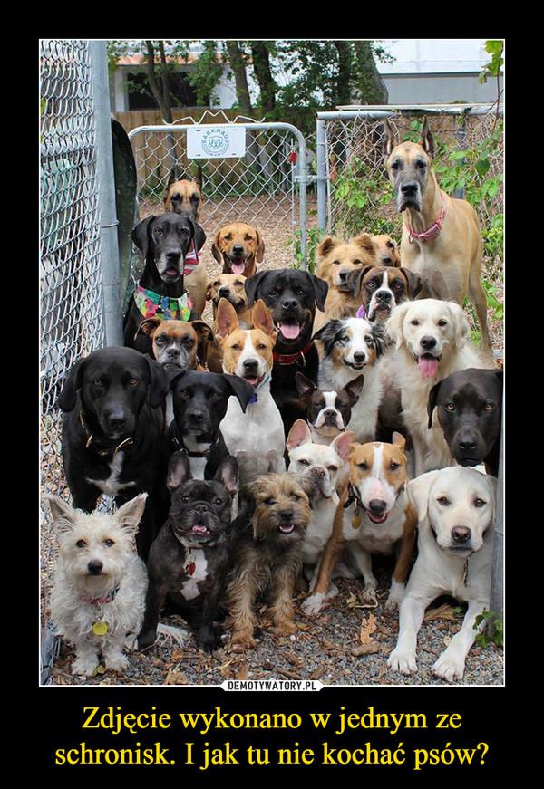 Zdjęcie wykonano w jednym ze schronisk. I jak tu nie kochać psów? –