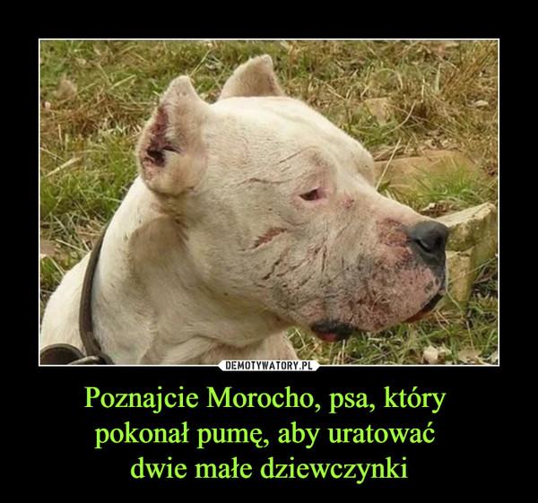 Poznajcie Morocho, psa, który pokonał pumę, aby uratować dwie małe dziewczynki –
