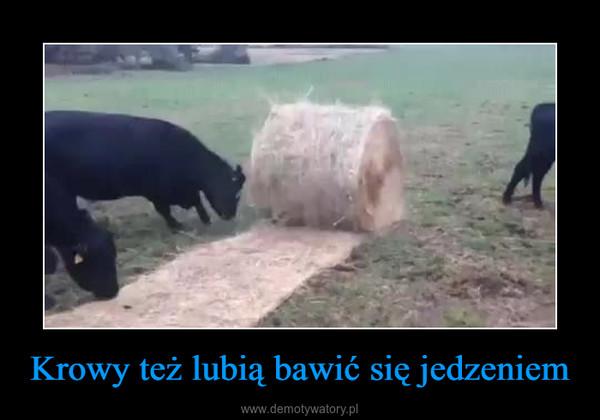 Krowy też lubią bawić się jedzeniem –
