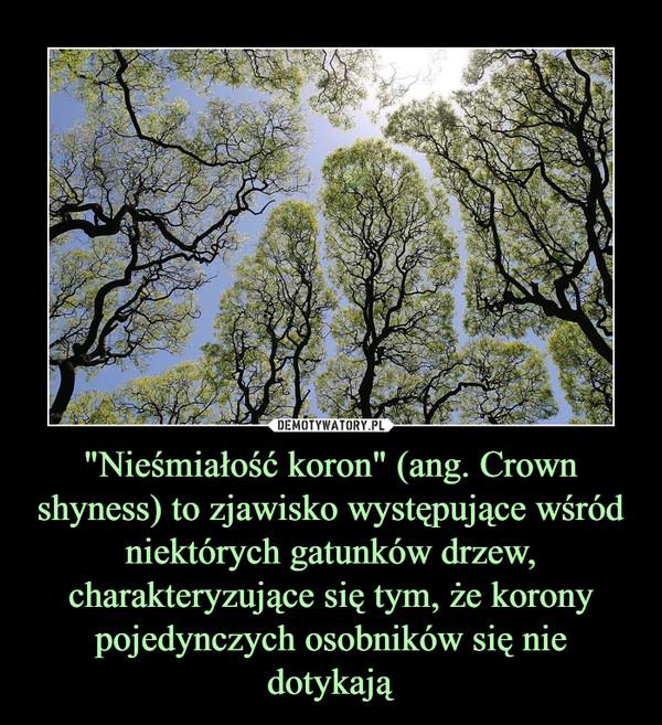 """""""Nieśmiałość koron"""" (ang. Crown shyness) to zjawisko występujące wśród niektórych gatunków drzew, charakteryzujące się tym, że korony pojedynczych osobników się nie dotykają –"""