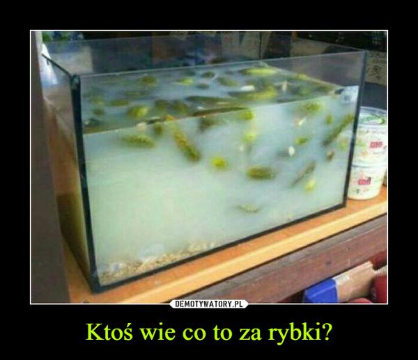 Ktoś wie co to za rybki? –